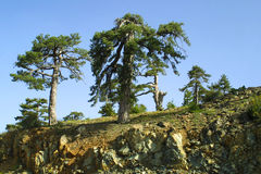 The Troodos Mountains. Summer view in the Troodos Mountains, Cyprus Royalty Free Stock Images