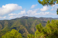 Troodos mountains landscape, Cyprus. Troodos mountains landscape with the pine branches in the foreground, Cyprus Royalty Free Stock Image