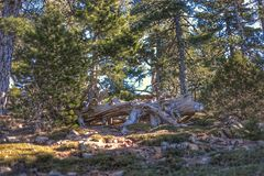 Troodos National Forest Park stock images