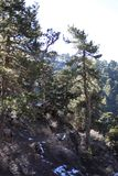 Troodos National Forest Park royalty free stock images