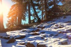 Troodos-Naturlehrpfade Stockbild