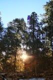 Troodos-Naturlehrpfade Stockbilder