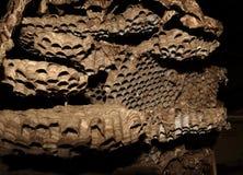 troosteloos nest van wesp Stock Foto