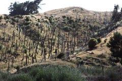 Troosteloze vallei Stock Foto's