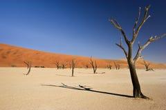 Troosteloze Woestijn Stock Afbeeldingen