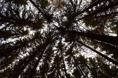 Tropa superior da árvore Fotos de Stock