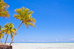 Tropcal island. Ocean and palms Royalty Free Stock Images