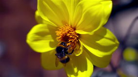 Tropeçar a abelha