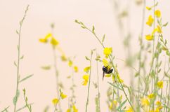 Tropeçar a abelha que as folhas amarelas são folhas verdes são naturalmente beautifu Foto de Stock Royalty Free