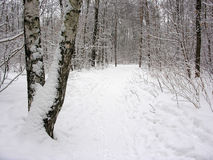 trope χειμώνας Στοκ φωτογραφία με δικαίωμα ελεύθερης χρήσης