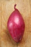 Tropea czerwona cebula Obraz Stock