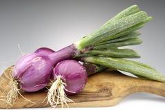 Tropea onions Stock Photos