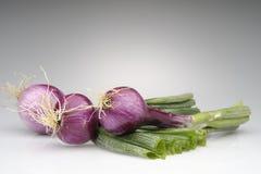 Tropea onions Royalty Free Stock Photos