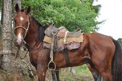 tropeiro de cheval de la ferme Images stock