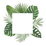 Tropen-Blumen-Blatt-Hibiscus Plumeria Monstera-Palmen-Aquarell-Rahmen-Illustrations-entwerfen botanische Frühlings-Dekorationen G stockfotografie