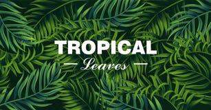 Tropen lassen Karte Vektor realistisch ausführliche exotische Fahnen des Palmblattes 3d vektor abbildung
