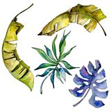 Tropenblätter in einer Aquarellart lokalisiert Stockfotos