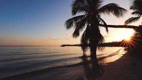 Tropeninselsonnenaufgang Palmeblatt und sandiger Inselstrand Sch?nes Seeansichtvideo stock video footage