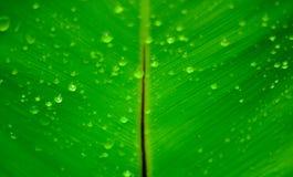 Tropfen auf Blättern Stockfoto