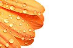 Tropfen auf Blumenblatt lizenzfreie stockbilder