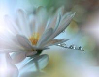 Tropfen auf Blumenhintergrundnahaufnahme Ruhige abstrakte Nahaufnahmekunstphotographie Druck für Tapete Blumenphantasiedesign Stockfoto