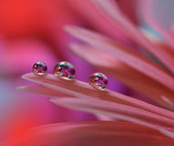 Tropfen auf Blumenhintergrundnahaufnahme Ruhige abstrakte Nahaufnahmekunstphotographie Druck für Tapete Blumenphantasiedesign Lizenzfreie Stockfotografie