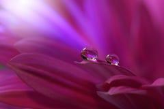 Tropfen auf Blumenhintergrundnahaufnahme Ruhige abstrakte Nahaufnahmekunstphotographie Druck für Tapete Blumenphantasiedesign Stockfotografie