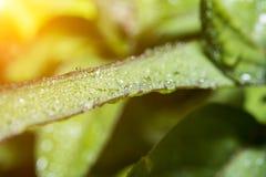 Tropfen auf dem grünen Blattunschärfehintergrund lizenzfreie stockfotos