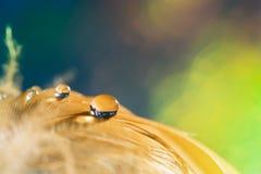 Tropfen auf der Vogel ` s Torte Goldene Feder mit einem Tropfen auf einem grünen Hintergrund stockfotografie