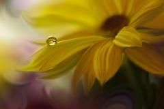 Tropfen auf gelber Hintergrundnahaufnahme Ruhige abstrakte Nahaufnahmekunstphotographie Druck für Tapete Blumenphantasiedesign Stockfotos