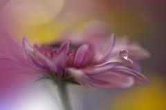 Tropfen auf gelber Hintergrundnahaufnahme Ruhige abstrakte Nahaufnahmekunstphotographie Druck für Tapete Blumenphantasiedesign Lizenzfreies Stockbild