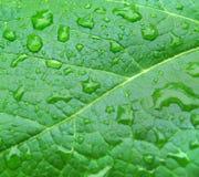 Tropfen auf grünem Blatt Lizenzfreies Stockbild