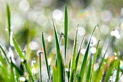 Tropfen auf Gras stockfoto