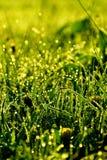 Tropfen auf Gras stockfotos