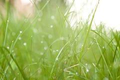 Tropfen auf Gras Lizenzfreies Stockbild
