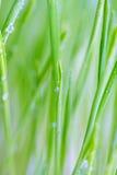 Tropfen auf Gras lizenzfreies stockfoto