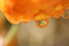 Tropfen auf Orange Lizenzfreie Stockfotografie