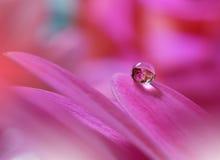 Tropfen auf purpurroter Hintergrundnahaufnahme Ruhige abstrakte Nahaufnahmekunstphotographie Druck für Tapete Blumenphantasiedesi Lizenzfreies Stockbild