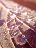 Tropfen auf trockenem Herbstblatt stockfotos
