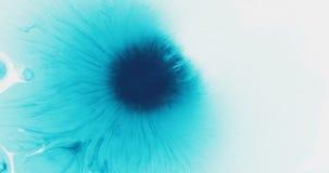 Tropfen der blauen Tinte des Türkises auf nasser Draufsicht des Weißbuches Lizenzfreie Stockfotografie