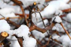 Tropfen des gefrorenen Wasser-Hängens Stockfoto