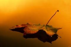 Tropfen des Herbstes lizenzfreies stockbild