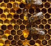 Tropfen des Honigs und der Bienen Lizenzfreie Stockbilder