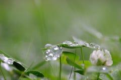 Tropfen des Regens auf Abdeckungblatt stockfotos
