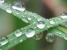 Tropfen des Regens auf den Blättern einer Grünpflanze lizenzfreies stockfoto