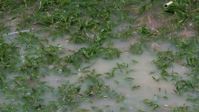 Tropfen des Regens tropfen auf große Pfütze Tropischer Niederschlag in Thailand stock video