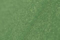 Tropfen des Taus auf dem grünen Gewebe Stockbild