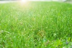 Tropfen des Taus auf einem grünen Gras Lizenzfreie Stockfotografie