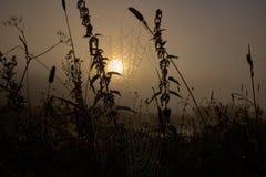 Tropfen des Taus auf einer Spinnenlinie während des ruhigen Sonnenaufgangs stockfoto