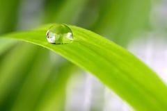 Tropfen des Wassers auf einem Blatt des Grases Stockfoto